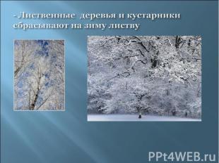 - Лиственные деревья и кустарники сбрасывают на зиму листву