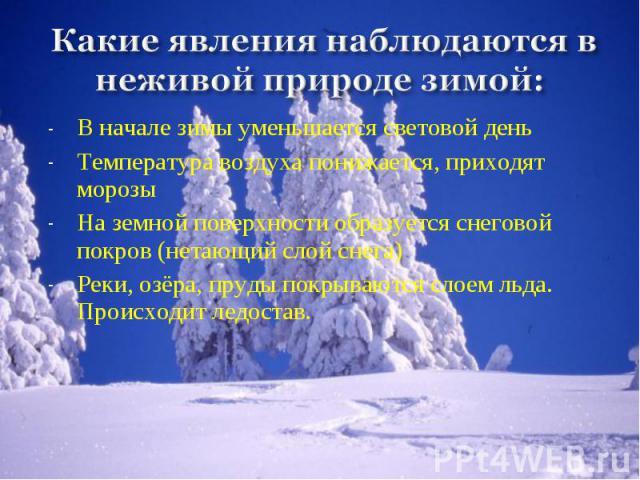 Другие наблюдения зимой в природе