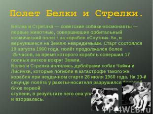 Полет Белки и Стрелки. Белка и Стрелка— советские собаки-космонавты— первые жи