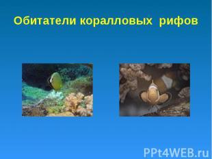 Обитатели коралловых рифов