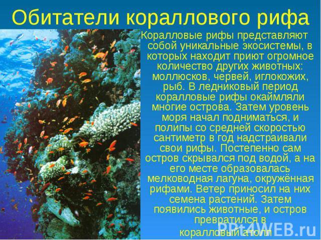 Обитатели кораллового рифа Коралловые рифы представляют собой уникальные экосистемы, в которых находит приют огромное количество других животных: моллюсков, червей, иглокожих, рыб. В ледниковый период коралловые рифы окаймляли многие острова. Затем …