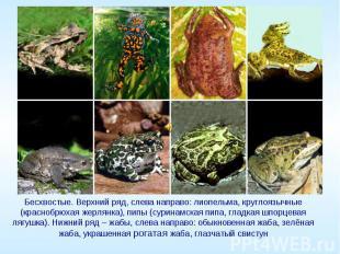 Бесхвостые. Верхний ряд, слева направо: лиопельма, круглоязычные (краснобрюхая ж
