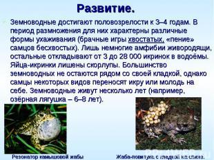 Развитие. Земноводные достигают половозрелости к 3–4 годам. В период размножения