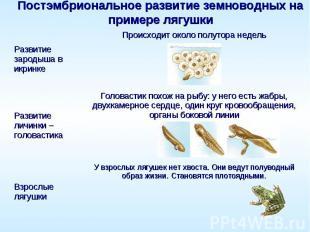 Постэмбриональное развитие земноводных на примере лягушки