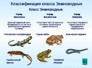 Классификация класса Земноводные