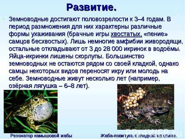 Развитие. Земноводные достигают половозрелости к 3–4 годам. В период размножения для них характерны различные формы ухаживания (брачные игры хвостатых, «пение» самцов бесхвостых). Лишь немногие амфибии живородящи, остальные откладывают от 3 до 2800…