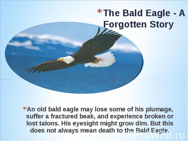 The Bald Eagle - A Forgotten Story An old bald eagle may lose some of his plumage, suffer a fractured beak, and experience broken or lost talons. His eyesight might grow dim. But this does not always mean death to the Bald Eagle.