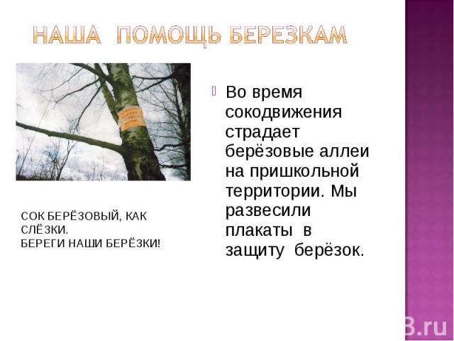 наша Помощь березкам Во время сокодвижения страдает берёзовые аллеи на пришкольной территории. Мы развесили плакаты в защиту берёзок. СОК БЕРЁЗОВЫЙ, КАК СЛЁЗКИ.БЕРЕГИ НАШИ БЕРЁЗКИ!