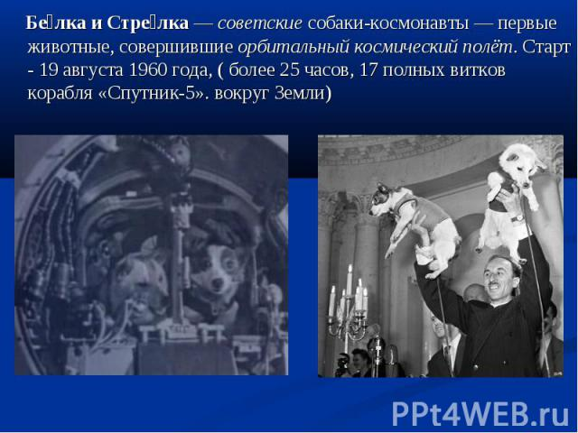Белка и Стрелка— советские собаки-космонавты— первые животные, совершившие орбитальный космический полёт. Старт - 19 августа 1960 года, ( более 25 часов, 17 полных витков корабля «Спутник-5». вокруг Земли)