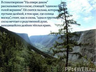 """В стихотворение """"На севере диком"""" рассказывается о сосне, стоящей """"одиноко на го"""
