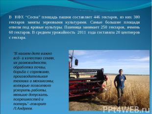 """В КФХ """"Сосна"""" площадь пашни составляет 446 гектаров, из них 380 гектаров заняты"""