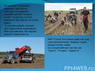 """40 гектаров у фермера занимают картофель. Ежегодно выращивает хороший урожай """"вт"""