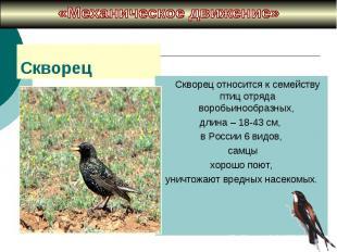 «Механическое движение» Cкворец относится к семейству птиц отряда воробьинообраз