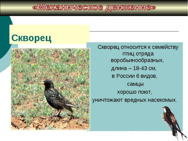 «Механическое движение» Cкворец относится к семейству птиц отряда воробьинообразных, длина – 18-43 см, в России 6 видов, самцы хорошо поют, уничтожают вредных насекомых.