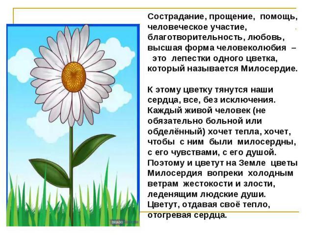 Сострадание, прощение, помощь, человеческое участие, благотворительность, любовь, высшая форма человеколюбия – это лепестки одного цветка, который называется Милосердие. К этому цветку тянутся наши сердца, все, без исключения. Каждый живой человек (…