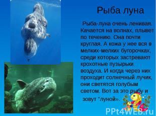 Рыба луна Рыба-луна очень ленивая. Качается на волнах, плывет по течению. Она по