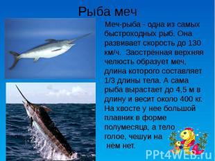 Рыба меч Меч-рыба - одна из самых быстроходных рыб. Она развивает скорость до 13