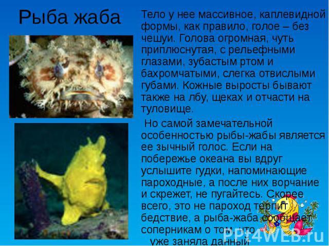 Рыба жаба Тело у нее массивное, каплевидной формы, как правило, голое – без чешуи. Голова огромная, чуть приплюснутая, с рельефными глазами, зубастым ртом и бахромчатыми, слегка отвислыми губами. Кожные выросты бывают также на лбу, щеках и отчасти н…