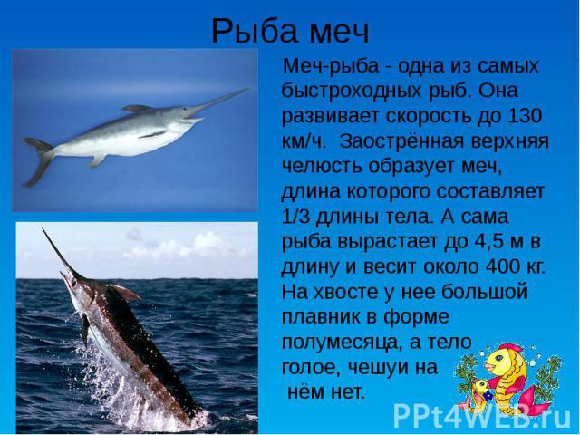 Рыба меч Меч-рыба - одна из самых быстроходных рыб. Она развивает скорость до 130 км/ч. Заострённая верхняя челюсть образует меч, длина которого составляет 1/3 длины тела. А сама рыба вырастает до 4,5 м в длину и весит около 400 кг. На хвосте у нее…