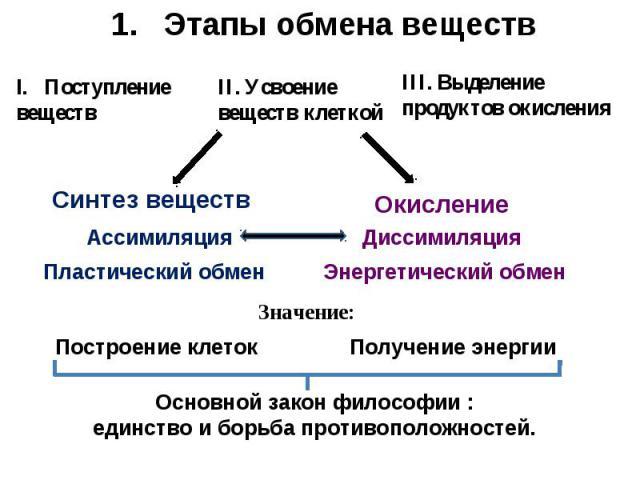 Этапы обмена веществ Основной закон философии : единство и борьба противоположностей.