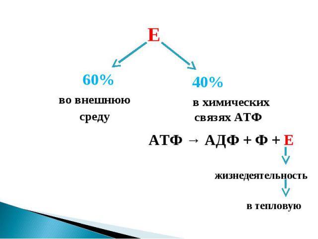 во внешнююсреду в химическихсвязях АТФ АТФ → АДФ + Ф + Е