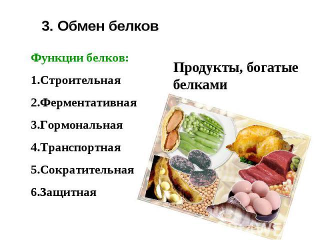 3. Обмен белков Функции белков:СтроительнаяФерментативнаяГормональнаяТранспортнаяСократительнаяЗащитная Продукты, богатые белками