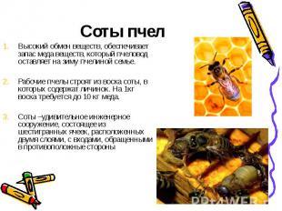 Соты пчелВысокий обмен веществ, обеспечивает запас меда веществ, который пчелово