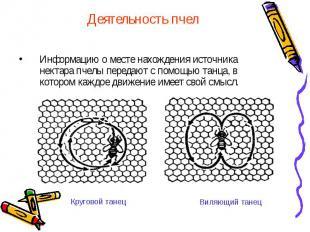 Деятельность пчел Информацию о месте нахождения источника нектара пчелы передают