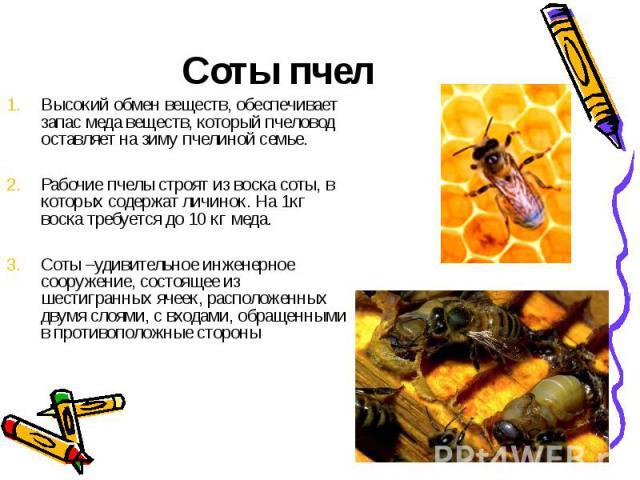Соты пчелВысокий обмен веществ, обеспечивает запас меда веществ, который пчеловод оставляет на зиму пчелиной семье.Рабочие пчелы строят из воска соты, в которых содержат личинок. На 1кг воска требуется до 10 кг меда. Соты –удивительное инженерное со…