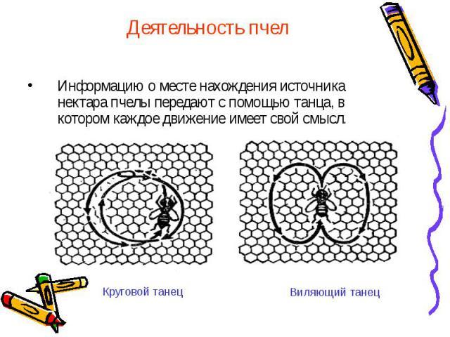 Деятельность пчел Информацию о месте нахождения источника нектара пчелы передают с помощью танца, в котором каждое движение имеет свой смысл.