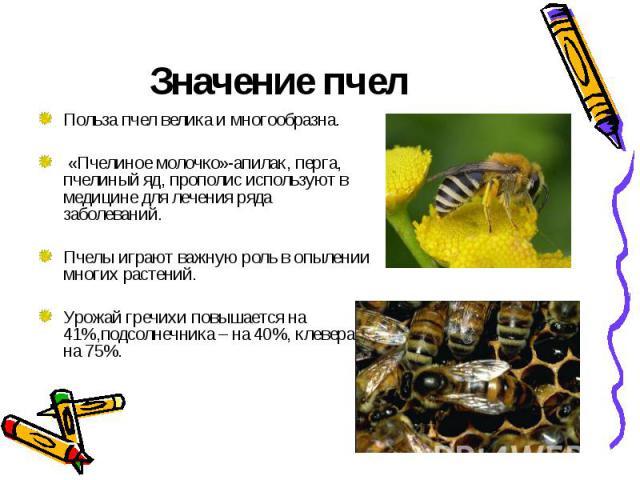 Значение пчелПольза пчел велика и многообразна. «Пчелиное молочко»-апилак, перга, пчелиный яд, прополис используют в медицине для лечения ряда заболеваний.Пчелы играют важную роль в опылении многих растений.Урожай гречихи повышается на 41%,подсолнеч…