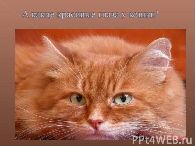 А какие красивые глаза у кошки!