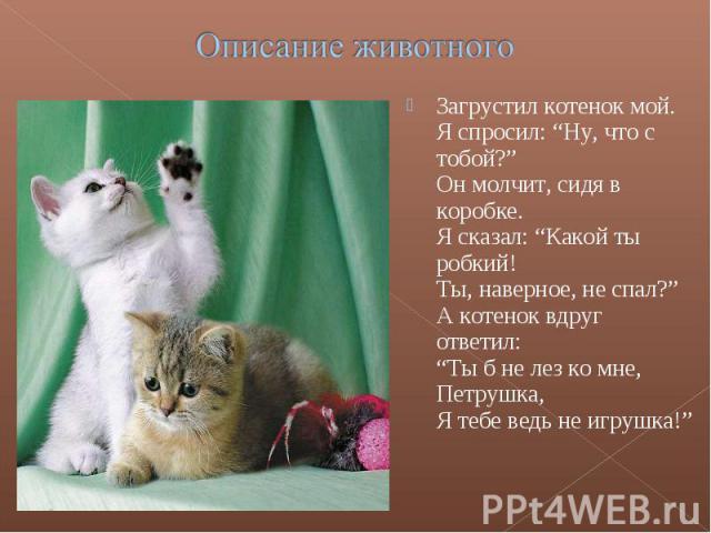 """Описание животногоЗагрустил котенок мой.Я спросил: """"Ну, что с тобой?""""Он молчит, сидя в коробке.Я сказал: """"Какой ты робкий!Ты, наверное, не спал?""""А котенок вдруг ответил:""""Ты б не лез ко мне, Петрушка,Я тебе ведь не игрушка!"""""""