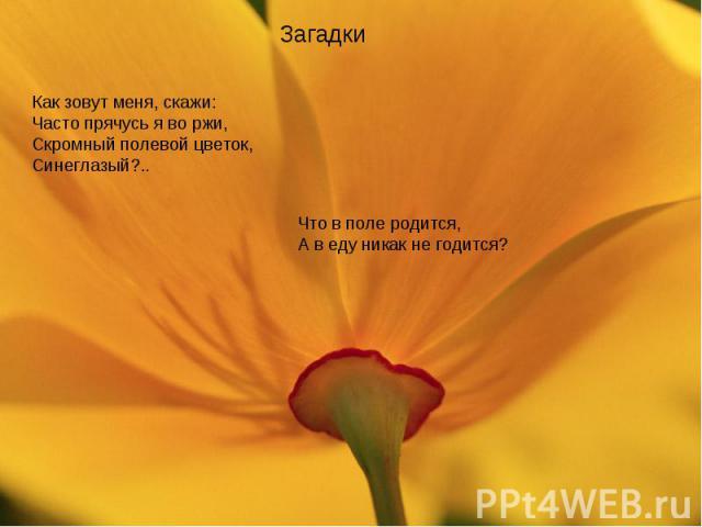ЗагадкиКак зовут меня, скажи:Часто прячусь я во ржи,Скромный полевой цветок,Синеглазый?..Что в поле родится,А в еду никак не годится?