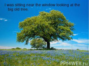 I was sitting near the window looking at the big old tree.