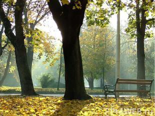 . Объяснительный диктант.Поздняя осень. Грачи улетели,Лес обнажился, поля опусте