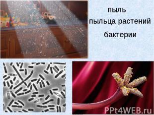 пыльпыльца растенийбактерии