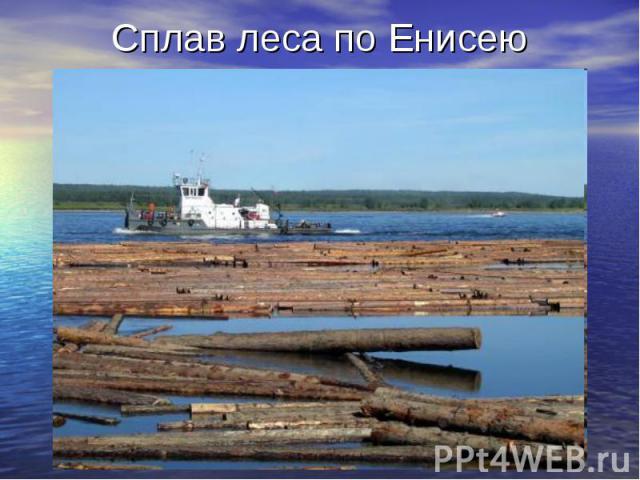 Сплав леса по Енисею