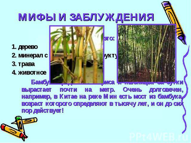 МИФЫ И ЗАБЛУЖДЕНИЯ22Бамбук это:1. дерево2. минерал с кольцевой моноструктурой3. трава4. животноеБамбук - родственник риса и пшеницы. За сутки вырастает почти на метр. Очень долговечен, например, в Китае на реке Мин есть мост из бамбука, возраст кото…