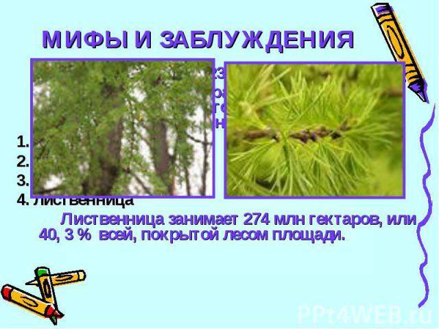 МИФЫ И ЗАБЛУЖДЕНИЯ23Какое дерево самое распространенное на территории бывшего Советского Союза и нынешнего СНГ:1. сосна2. береза3. ель4. лиственницаЛиственница занимает 274 млн гектаров, или 40, 3 % всей, покрытой лесом площади.