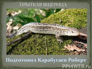 ПРЫТКАЯ ЯЩЕРИЦАПодготовил Карабугаев Роберт