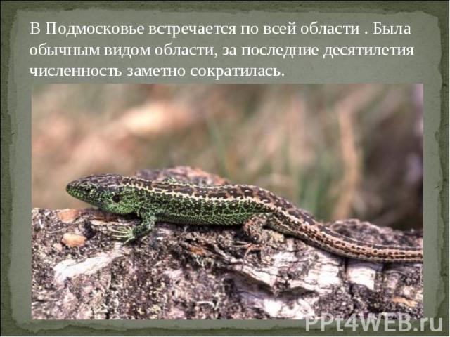 В Подмосковье встречается по всей области . Была обычным видом области, за последние десятилетия численность заметно сократилась.