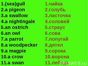 (sea)gulla pigeona swallowa nightingalean ostrichan owla parrota woodpeckera mag