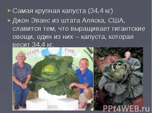 Самая крупная капуста (34,4 кг)Джон Эванс из штата Аляска, США, славится тем, чт