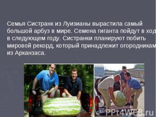 Семья Систранк из Луизианы вырастила самый большой арбуз в мире. Семена гиганта