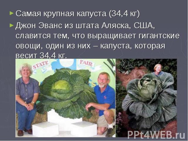 Самая крупная капуста (34,4 кг)Джон Эванс из штата Аляска, США, славится тем, что выращивает гигантские овощи, один из них – капуста, которая весит 34,4 кг.