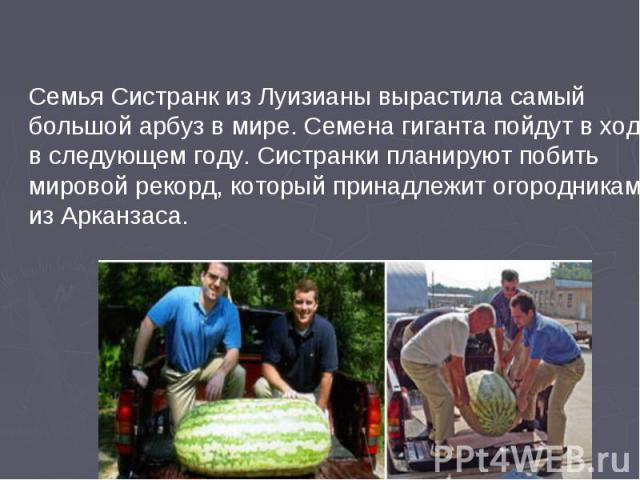 Семья Систранк из Луизианы вырастила самый большой арбуз в мире. Семена гиганта пойдут в ход в следующем году. Систранки планируют побить мировой рекорд, который принадлежит огородникам из Арканзаса.