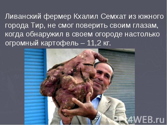 Ливанский фермер Кхалил Семхат из южного города Тир, не смог поверить своим глазам, когда обнаружил в своем огороде настолько огромный картофель – 11,2 кг.
