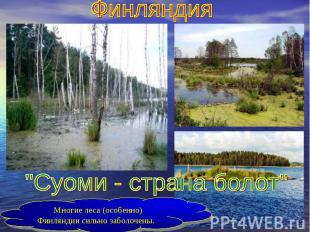 """Финляндия""""Суоми - страна болот""""Многие леса (особенно) Финляндии сильно заболочен"""