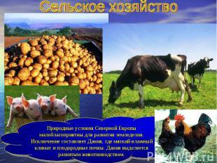 Сельское хозяйствоПриродные условия Северной Европы малоблагоприятны для развити